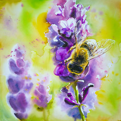 Honey bee on a lavender flower.Picture cerated with watercolors