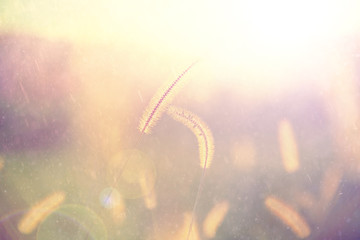 Closeup of rainy golden color grass field with added sun flare. Vintage fiter effect used.