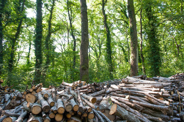 Pile of wood in forest