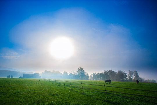 Horses on a foggy New England morning.