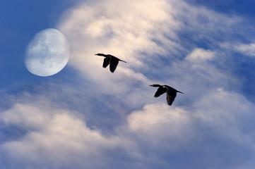 Birds Flying Silhouette Moon