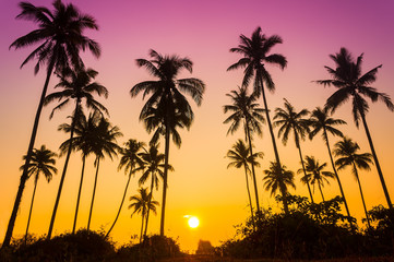 Sillouette of coconut tree during sunrise