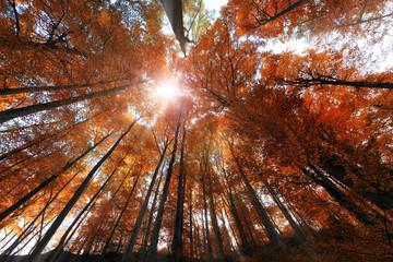 In autumn's heart
