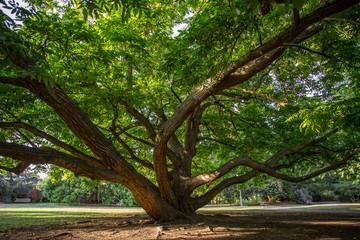 Imposanter Baum im Schloßpark von Bad Kreuznach