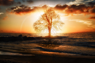 The Tree in the Sea