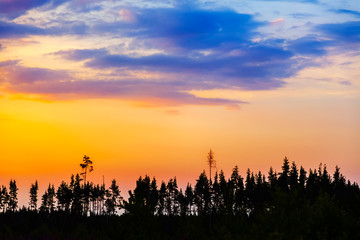 Orange sunset in the forest