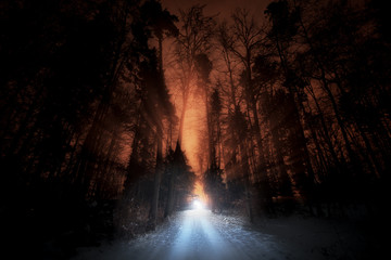 The road in the woods