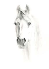 illustration of horse