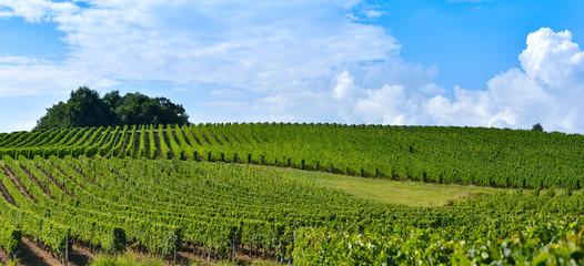 Vineyard Sunrise - Landscape-Bordeaux Vineyard