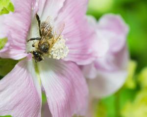 animals bee