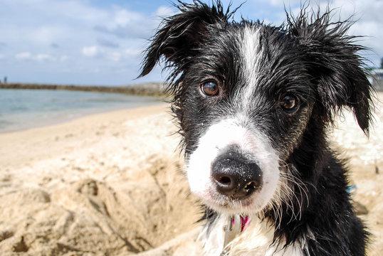 Puppy on Beach