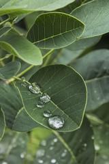 Nature après la pluie