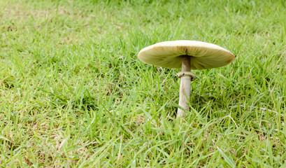 mushrooms grow in nature.