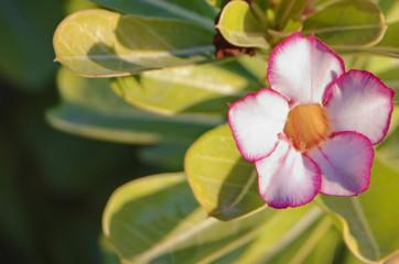 flower with blur