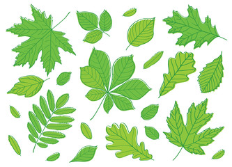 Hand drawing summer leaves. A big set of images of leaves of different trees. Sketch, design elements. Vector.