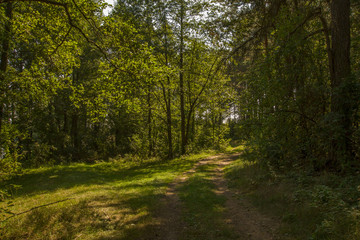 The path in the deciduous forest