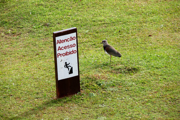 Pássaro na grama com placa de aviso