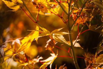 Gli alberi ed i colori dell'autunno