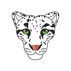 Wild cat, irbis, leopard, snow bars