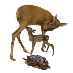 Rehmutter mit Bambi (freigestellt)