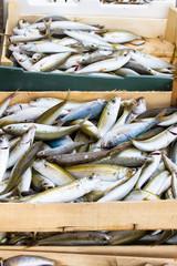 Pesce fresco al porto di Briatico