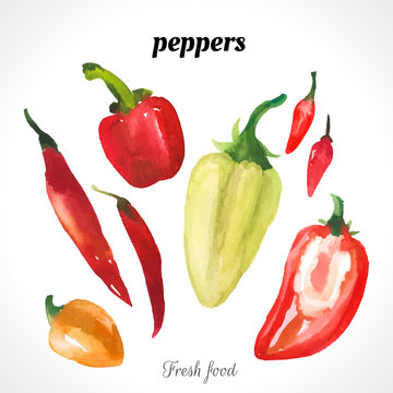 Watercolor illustration of a painting technique. Fresh organic food. Set of different varieties of peppers: chili peppers, bell pepper, sweet pepper, hot.