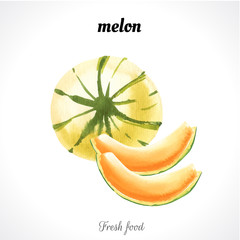 Watercolor illustration of a painting technique. Fresh organic food. Melon fruit.
