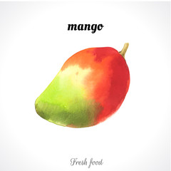 Watercolor illustration of a painting technique. Fresh organic food. Mango exotic fruite