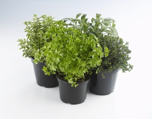 Four pots of herbs