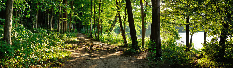 Türaufkleber Wald trail in the forest