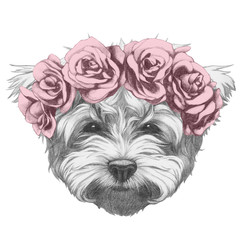 Original drawing of Maltese Poodle with floral head wreath. Isolated on white background.