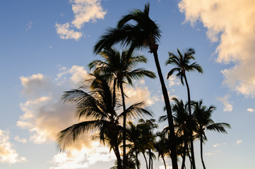 Palm trees silhouetted against a tropical sunset, Maui, Hawaii,