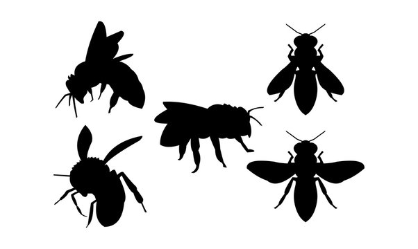 Bee and Wasp Vector Silhouette Set
