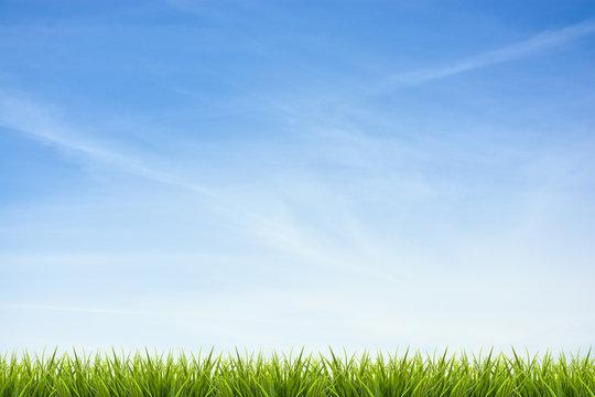 Grass grass under blue sky and clouds