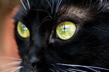 Eyes of a  cat closeup.