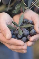 Hands holding black olives