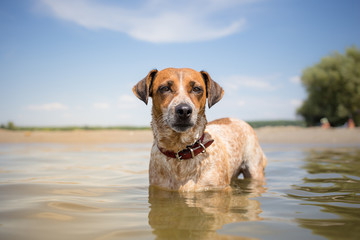 MIxed breed dog on vacation