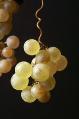 Muskateller grapes