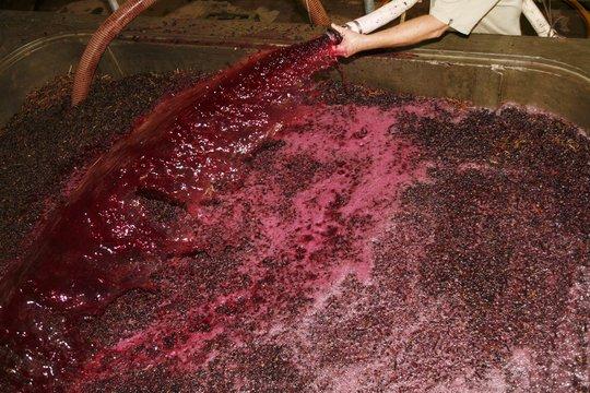 A vat full of grape mash