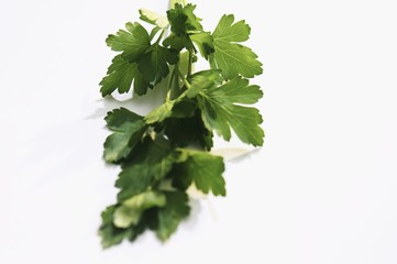 A sprig of flat-leaf parsley