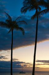 Palm trees on the beach at sunset, Maui, Hawaii, USA