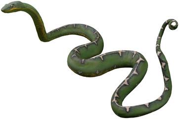 Schlange grün freigestellt