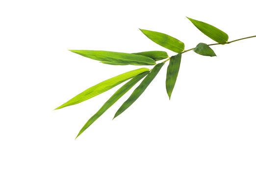 bamboo leaf isolate on white