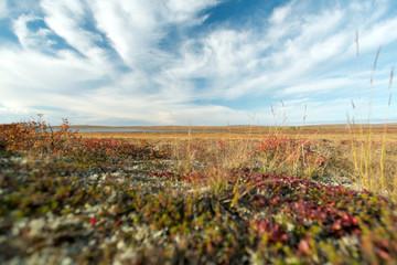 Nunavut Landscape, Canada