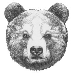 Original drawing of Bear. Isolated on white background