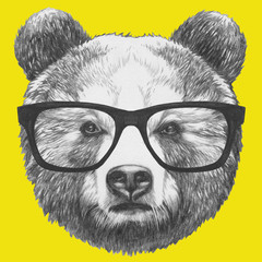 Original drawing of Bear with glasses. Isolated on colored background