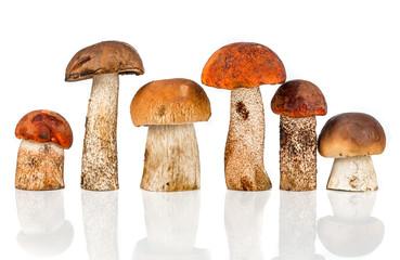 Fototapeta Orange-cap Boletus and porcini mushroom obraz