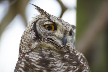 owl in the zoo of South Africa