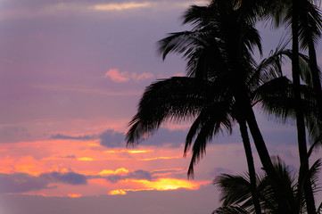 Palm trees silhouetted against a tropical sunset, Kauai, Hawaii,