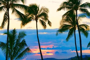 Palm trees silhouetted against a tropical sunset, Kauai, Hawaii,